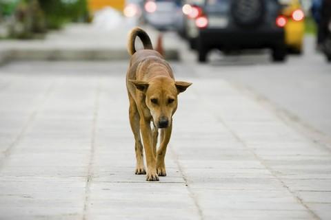 cane-vagante.jpg